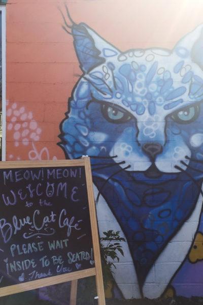 アメリカの猫カフェに行ってみたよ♪