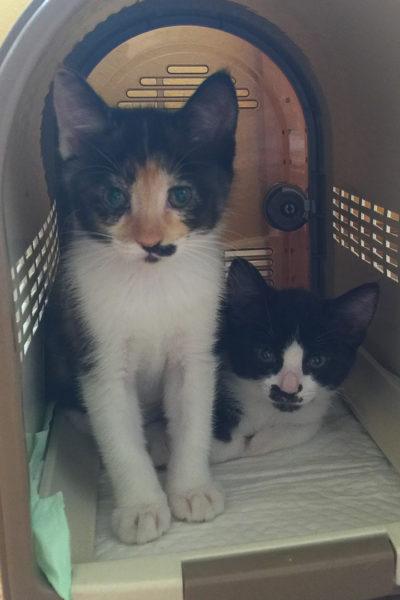 【ねこ】子猫の姉妹がやってきた!