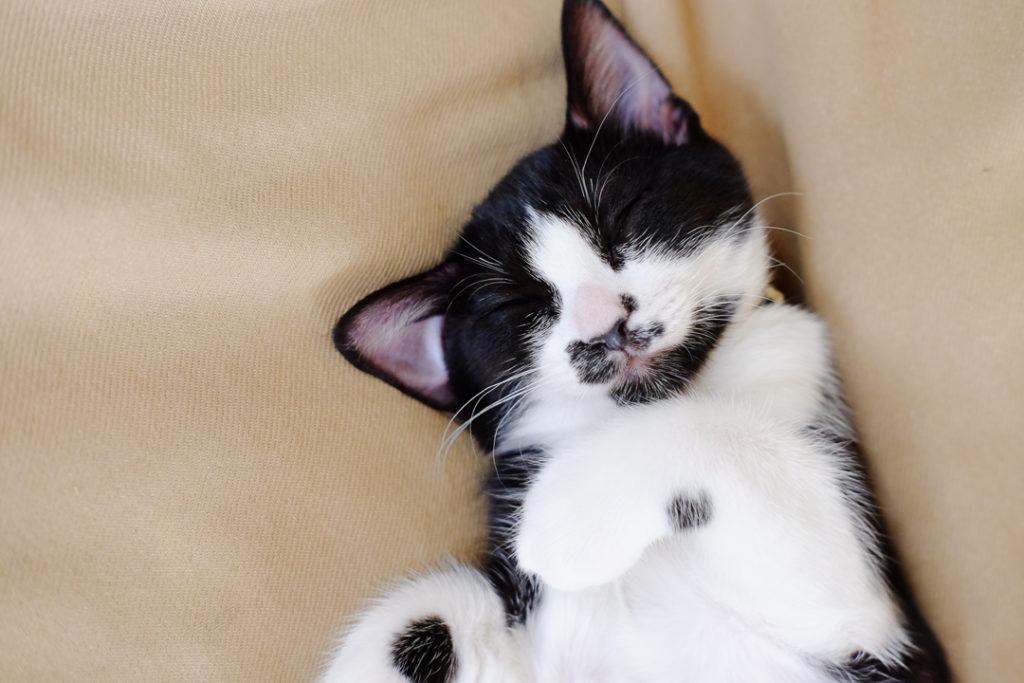寝顔もかわいいでしょ