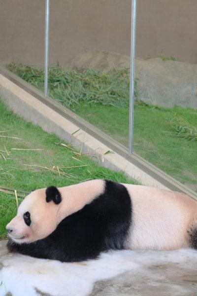 白浜・アドベンチャーワールドへ。パンダといえばここです♪