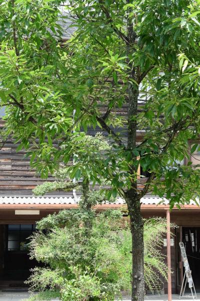 古い校舎を利用した素敵な空間・秋津野ガルテンへ