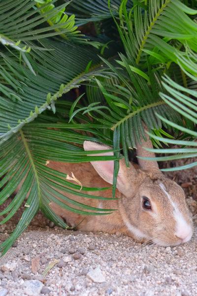 広島旅行⑦-ウサギの楽園、大久野島へ・その1