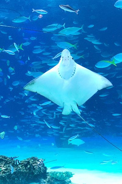 2017年夏・日本滞在⑭サンシャイン水族館&しゃぶしゃぶレストラン「鍋ぞう」さん