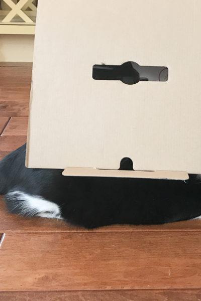 マルチ調理器「インスタントポット」を買ったおはなし&かくれんぼあんこちゃん。