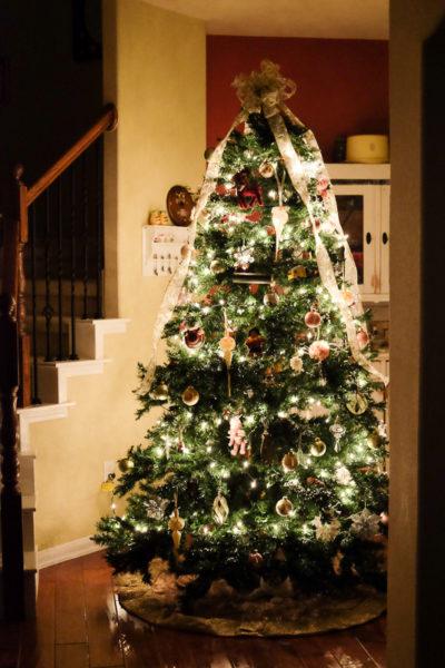 クリスマスツリーの飾り付け完了🎄ねこたちも喜んでます。