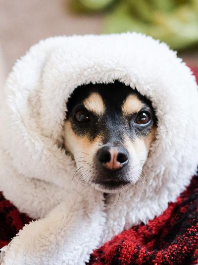 寒いからラニ子ちゃんを暖かくしてあげた♪