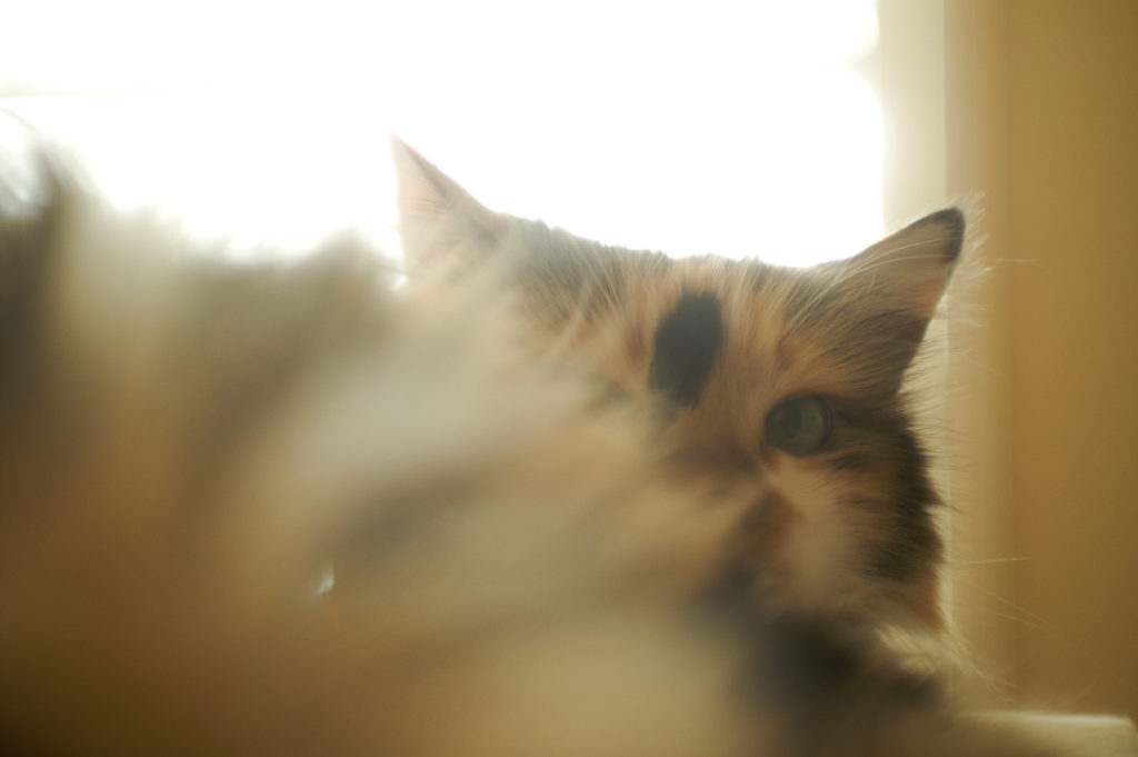 今は亡き愛猫Miki