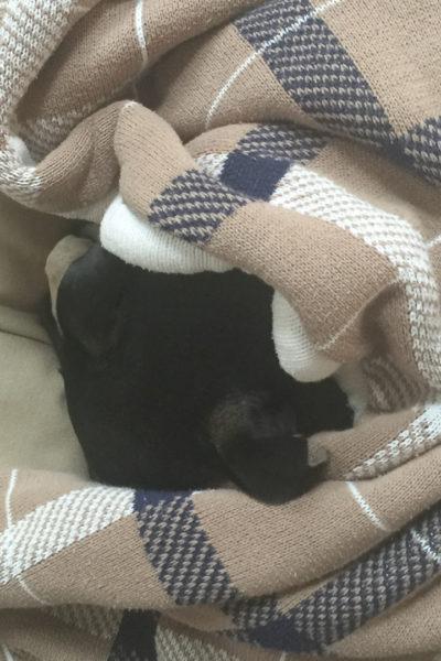 【いぬ】寒がりの犬をもつ、わたしの日課