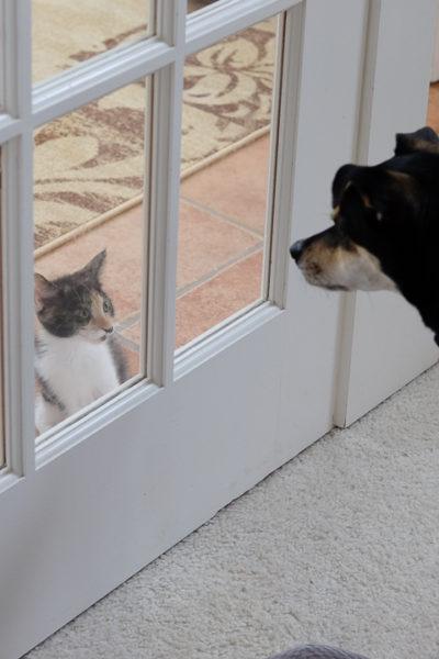 【いぬとねこ】子猫たちが気になって仕方がないラニ子