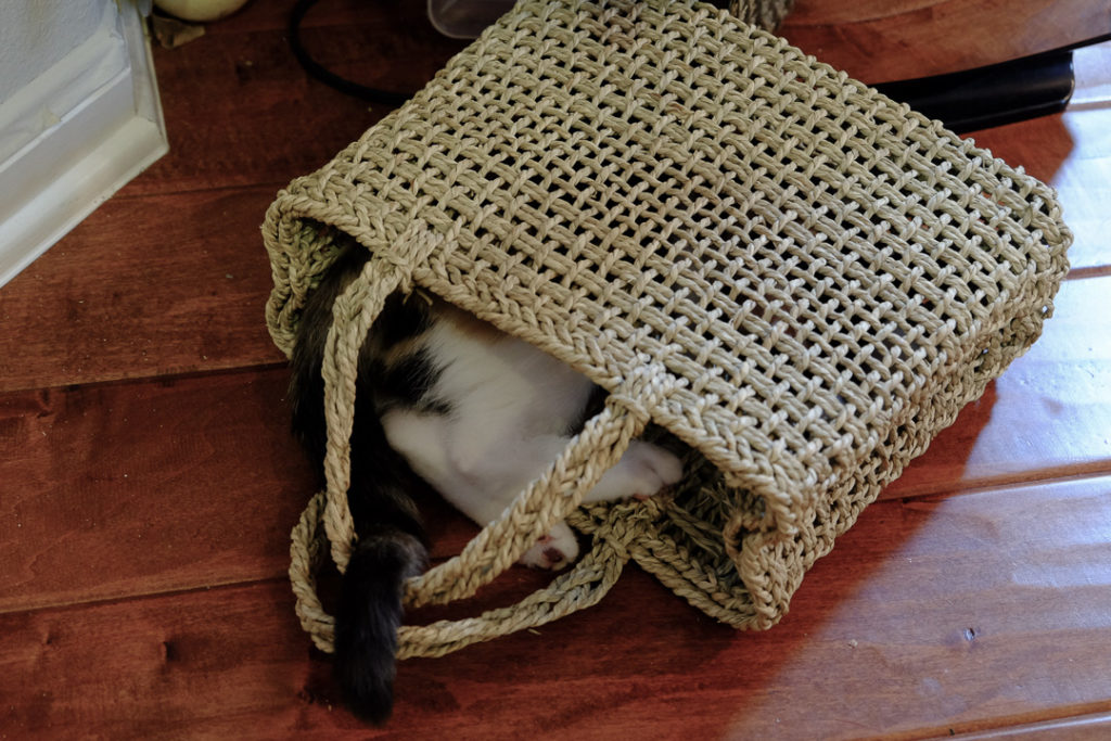 籠バッグがお気に入り