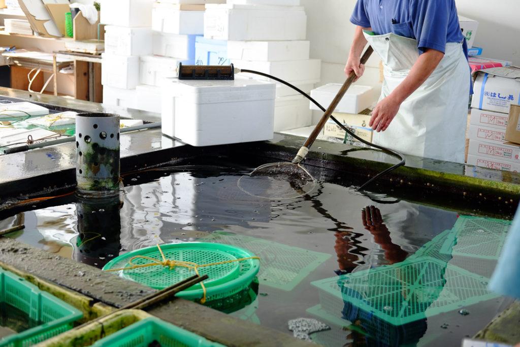 いけすから魚をすくいとって...