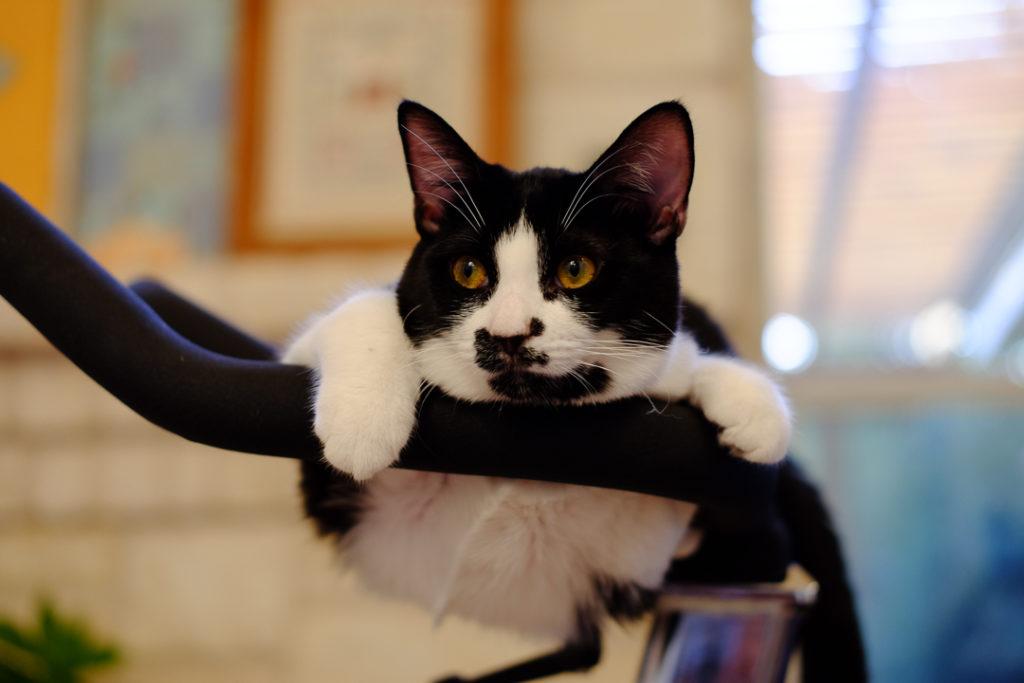 まだ子猫なのに、貫禄ありすぎでしょ