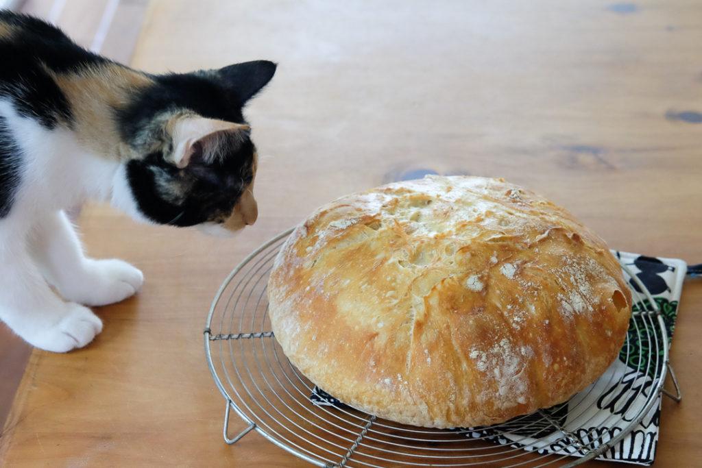 こねないパン、やけた♪