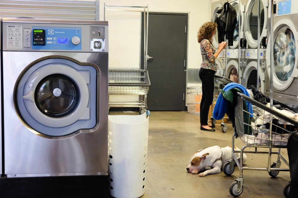 わんこと一緒にお洗濯