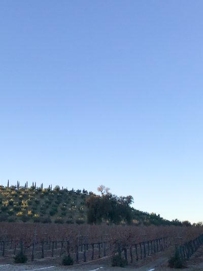 カリフォルニア「パソロブレス」のちょっとアートなワイナリー [Sculpterra Winery & Sculpture Garden]