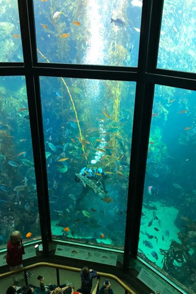 「モントレーベイ水族館」の魅力、語りつくします♪ ②