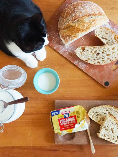 手作りサワードウブレッドと手作りヨーグルトの朝ごはん。&あんこちゃん。
