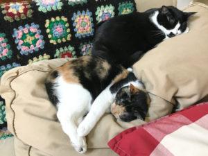 【ねこ】昼寝のおとも、ゆずあん姉妹。