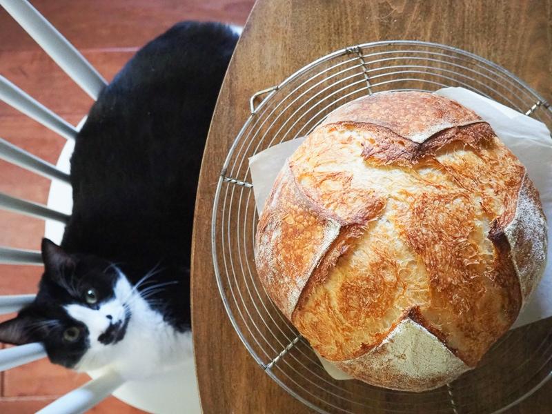 パンには興味なし