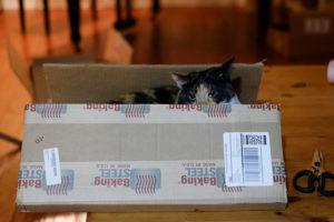 【ねこ】新しい箱が来たら、とりあえず使ってみる。