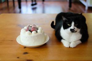 あんこちゃんのケーキ?