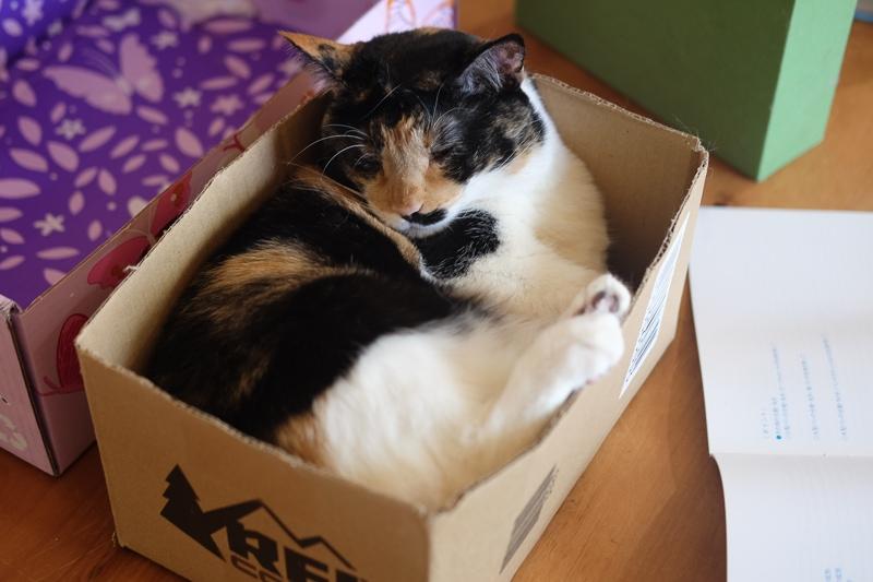 お気に入りの箱