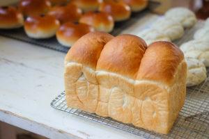 試作中の食パン
